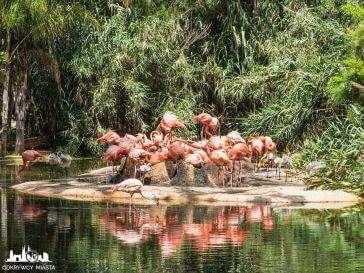 Zoo w Barcelonie