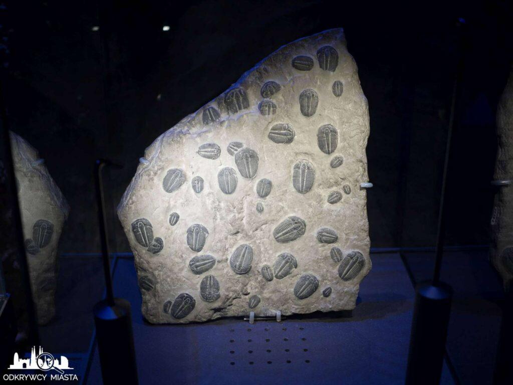 Muzeum Historii Naturalnej dawne tworzenia odbite w kamieniu