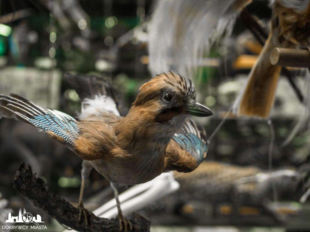 Muzeum Historii Naturalnej ptak na gałęzi