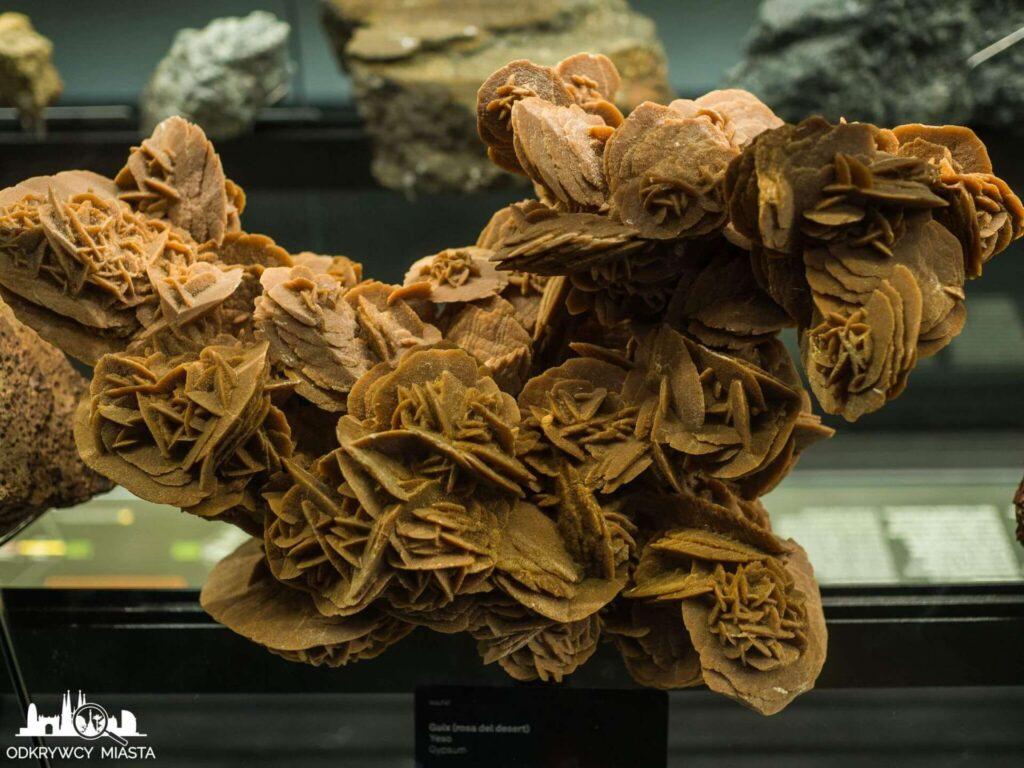 Muzeum Historii Naturalnej róża pustyni
