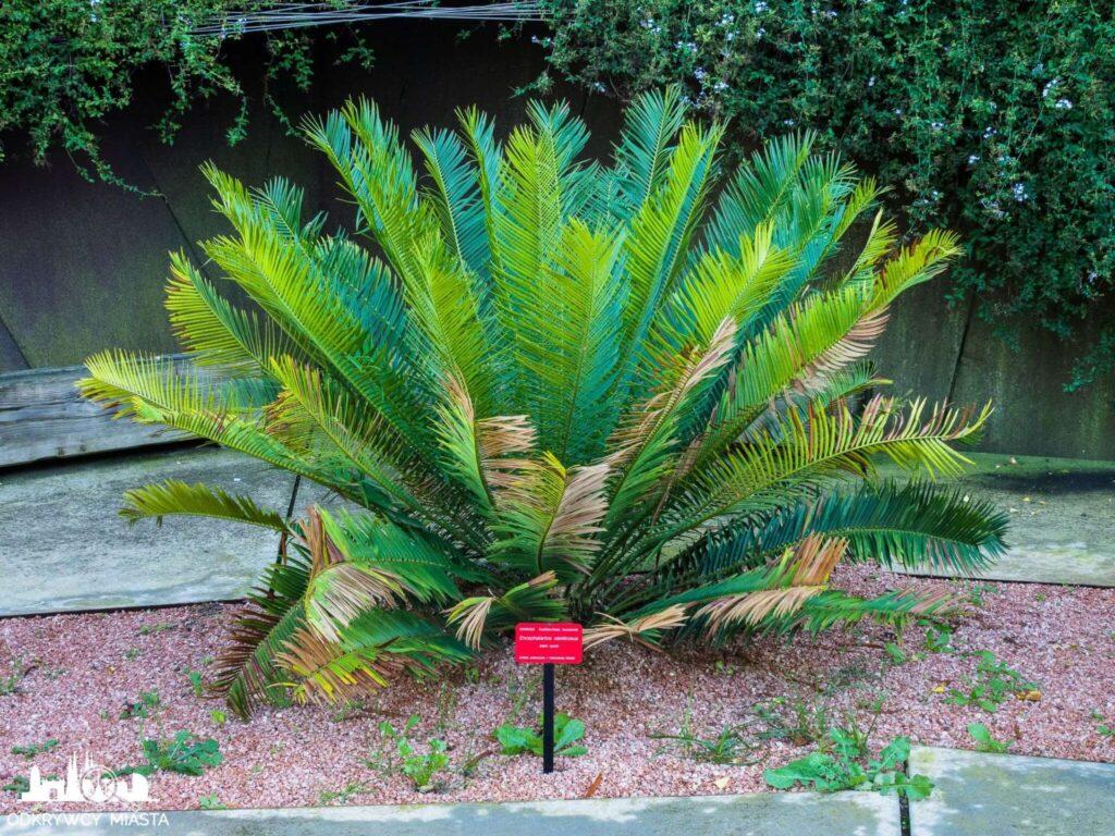 Ogród botaniczny w Barcelonie zielony krzew