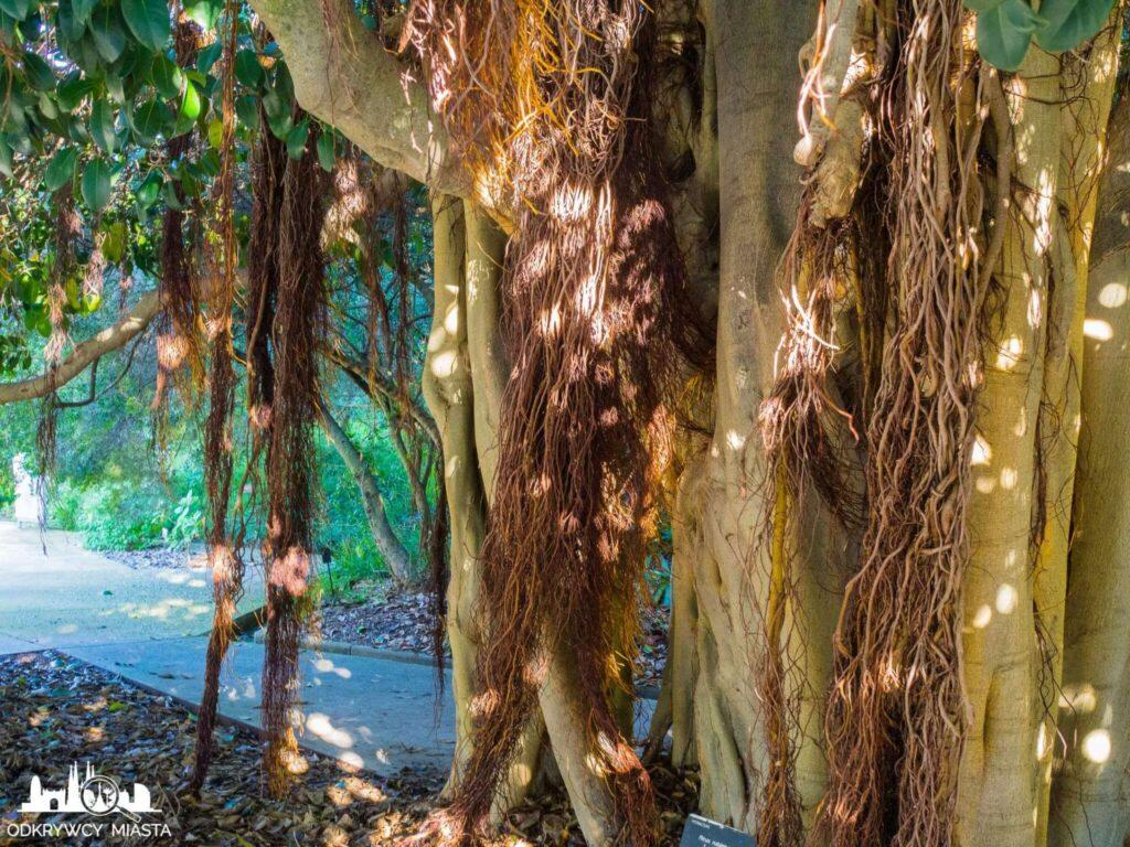 Ogród botaniczny w Barcelonie światła i cienie na drzewie
