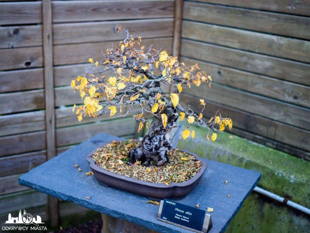 żółte drzewko