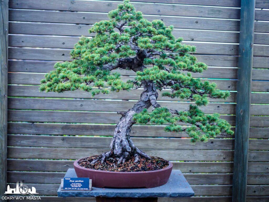 małe drzewko