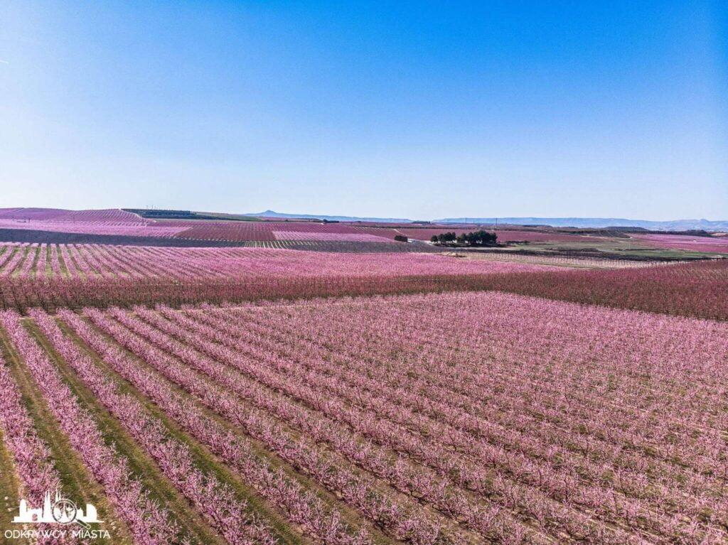 Wiosna w kataloni Aitona