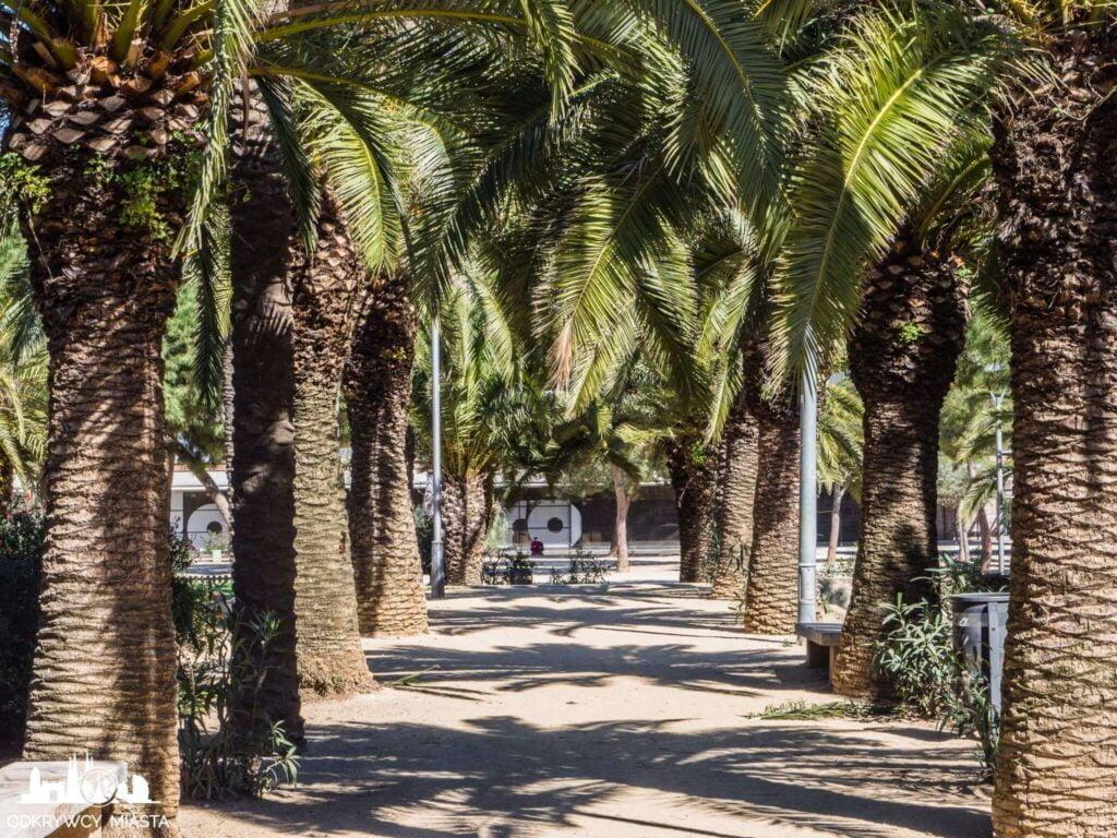 Park joan miro sciezka pomiędzy palmami
