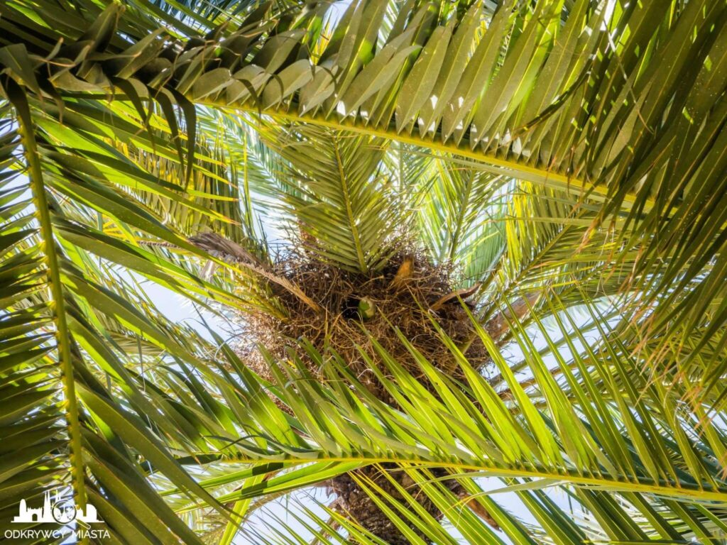 Park joan miro gniazdo papug na palmie