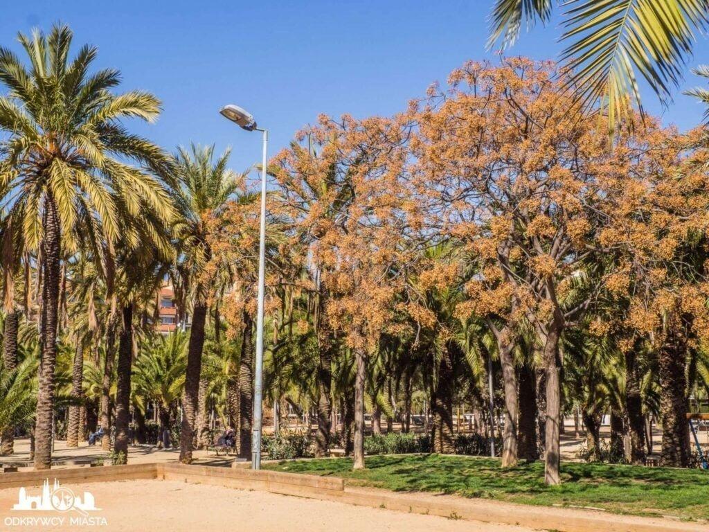 Park joan miro kwitnące drzewa