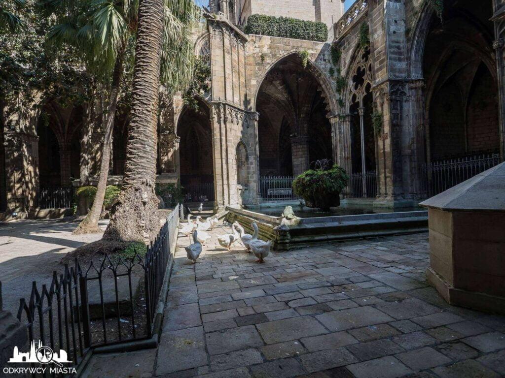 Katedra św. Eulali białe gęsi na dziedzińcu