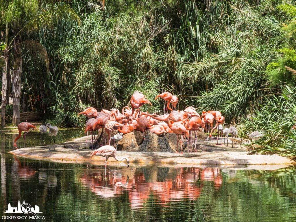 flamingi w barcelońskim zoo